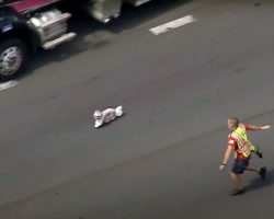 Dog Leads Firefighters On A Heart-Pounding 7-Minute Chase On The Interstate