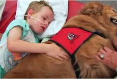 Boy With Brain Injury Won't Wake Up, Family Says Goodbye As Dog Lay On Top Of Him