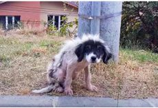 Locked-Out For Being A Nuisance, He Weakened & Lost Fur As He Shivered In Cold