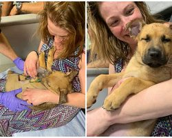 Pup Stops Breathing & Goes Limp From Opioid Overdose, Medics Work To Save His Life