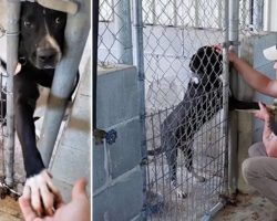 Shelter Dog Wants To Hold Hands With Anyone Passing By