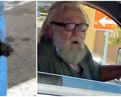 Man Throws His Dead Dog Out Of Car Window In A Walmart Parking Lot
