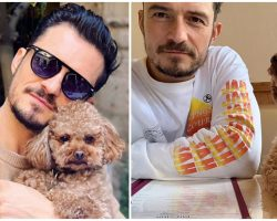 Orlando Bloom Is Broken Over Disappearance Of His Beloved Dog, Offering Reward