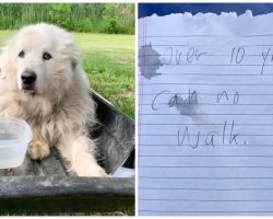 Owner Ties Immobile Dog To Sled With A Note & Dumps Him At Humane Association