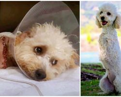 Abandoned With A Broken Back, Legs & Pelvis, She Learned To Walk On 2 Legs