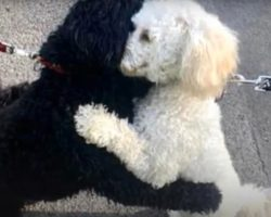 Two Strangers' Dogs Lock Paws For A Sibling Hug While Out On A Walk