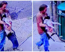 Man Carries French Bulldog To Garbage Can & Dumps Him In It On A Hot Day