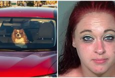 Pup Yelps For Help & Spits Out Blood After Owner Left Him In Hot Car For An Hour