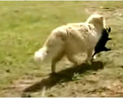Cat Sneaks In & Steals Puppies One-By-One, Dog Owner Quietly Trailed Behind Her