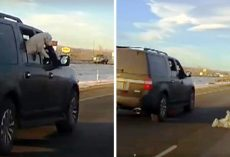 Dog Jumps Out Of Moving Vehicle On I-70, Tumbles Around As Cars Go Speeding By
