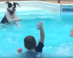 Dog Joins Kids In The Pool And Mimics Them After Learning To Splash