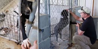 Shelter Dog Desperate For Love Reaches Out His Paw To Everyone That Passes By His Kennel