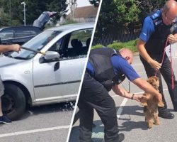 Heroic Man With An Axe Rescues 'Lifeless Dog' From Boiling Hot Car