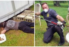 Firefighters Race To Remove 2 Adult Dogs & 11 Pups From Beneath Shed On Hot Day