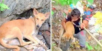 Dog Falls Into Pit With Bleeding Cut On Her Chest And Laid Down Quietly To Await Death