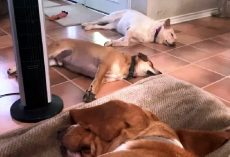 "Sleeping Dogs Get Shaken To Their Core When Dad Says The ""Unspeakable"" Word"