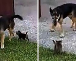 Mom Brings Home Abandoned Kitten & Asks Her Senior Rescue Dog To Watch Over Him