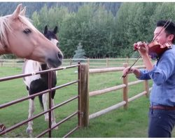 "Man Playing Violin Is Joined By 2 Horses Who ""Dance"" To His Musical Serenade"