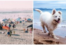 Woman Kicks Her Dog & Drowns Him In Ocean As Beachgoers Look On In Horror