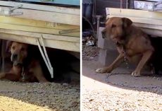 Owner Chains Dog To One Spot For 15 Years, Mocks Anyone Who Tries To Save Him