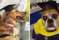 Dogs Wearing Caps and Gowns Graduate From Pet Therapy Program