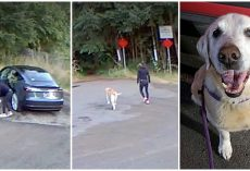 Lady Tricks Her Dog Into Going For Walk In Woods, Leaves Him There & Drives Off