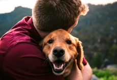 10 Most Extra-Affectionate Dog Breeds