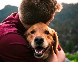 10 Most Extra-Affectionate Dog Breeds