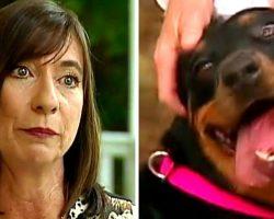 Dog's Family Were In A Car Crash 13 Days Ago, But Dog Still Waits At Crash Site