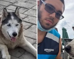 Amazon Delivery Driver Jumps Into Pool To Save Senior Husky From Drowning In Pool