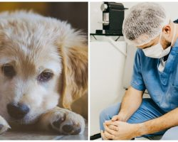 New Strain Of Illness On The Rise In Dogs & Veterinarians Are Worried