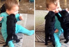 Tiny Puppies Jump All Over Giggling Baby, Attack Him With Their Hugs And Kisses