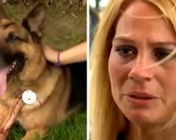 Officer's Wife Adopts Her Husband's K9 Partner After The Cop Dies In Accident