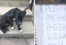 Dog Was Dumped And Left Tethered To A Railing With Some Pizza And A Note