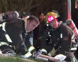 Small Fire Turns Into Disaster When Firefighters Find Dog Clinging To His Life