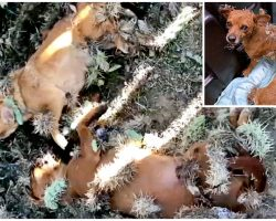Stray Pups Covered In Cactus Needles Laid On Ground & Shook Uncontrollably In Pain