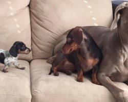 A Little Pup Is Added To The Mix Changing The Dynamic Of Two Inseparable Dogs