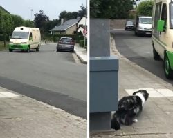 Border Collie Hears The Ice Cream Man And Gets In Position For Their Routine