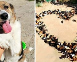 Man Started Taking In Homeless Dogs, Now He Has Over 750 Dogs Ready For Homes