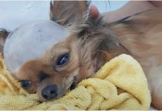 Shattered Dog Struck In Head Wants To Live Despite His Body Shutting Down