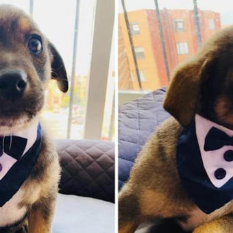 Shelter Puppy Got All Dressed Up In A Tuxedo For His New Family To Pick Him Up, But They Never Show Up