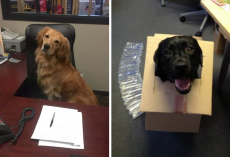 17 Office Dogs Who Make Work A Much Better Place To Be