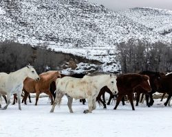 Breeder Dumps 28 Pregnant Horses In The Cold Because They Wouldn't Bring Profit