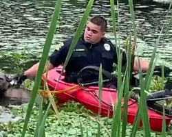 Officer Uses Kayak To Try And Grab Dog Who Fell Into A Pond While Avoiding Cars