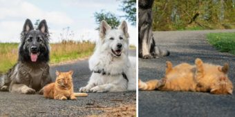 Cat Saved By Family And Raised By Their Dogs Now Thinks He's A Dog