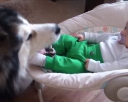 Parents Thought Dog Was Caring For Baby But They See Baby's Foot In Dog's Mouth