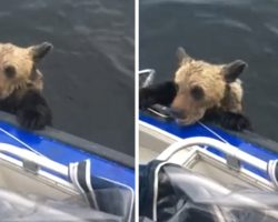 Fishermen Are Out On The Lake When Bear Cubs Swim Up & Hold On For Dear Life