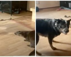 Otter Thinks He's A Dog & Gets Into Wrestling Match With Pooch At Rehab Center