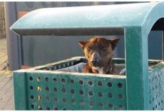 Shivering Dog Peeks Head Out From City Garbage Can & Pleads For Worker To Help