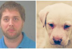 Man Shoots Neighbor's 6-Month-Old Labrador Retriever Because Pup Annoys Him